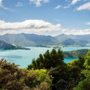 Queen Charlotte Track and Marlborough Sounds Walking Holiday