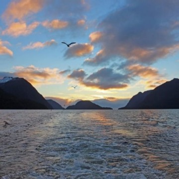 Fiordland Jewel Cruise