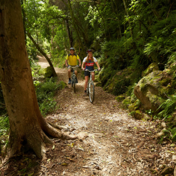 Adventure South NZ - Timber Trail, Waikato and Great Lake Cycle